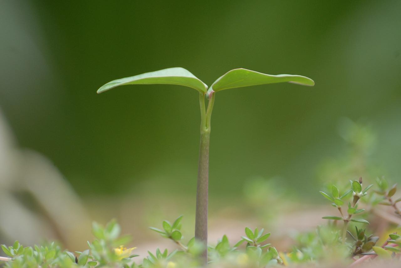 plant-951135_1280